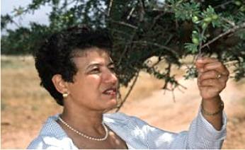 Das original Arganöl von den marokkanischen Berberfrauen-Kooperativen